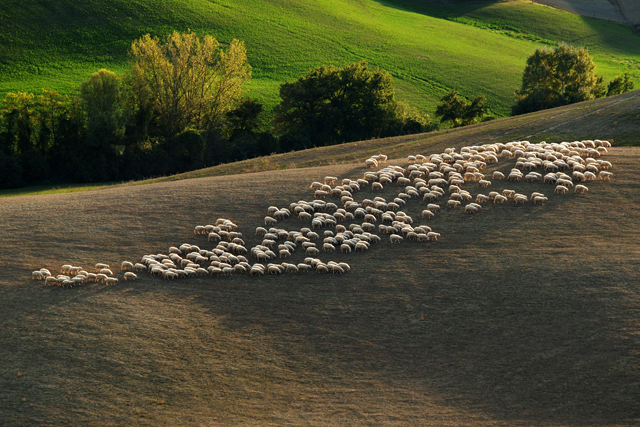 Val d'Orcia 2009
